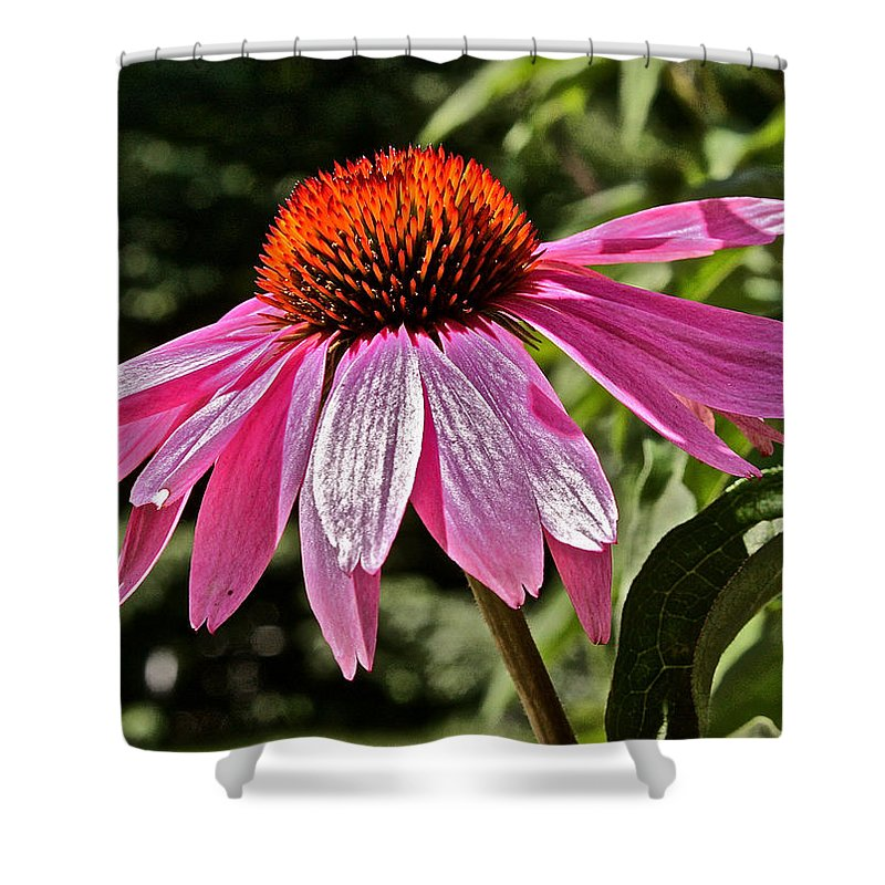 Echinacea Shower Curtain featuring the photograph The Flower by Mark Prescott Crannell