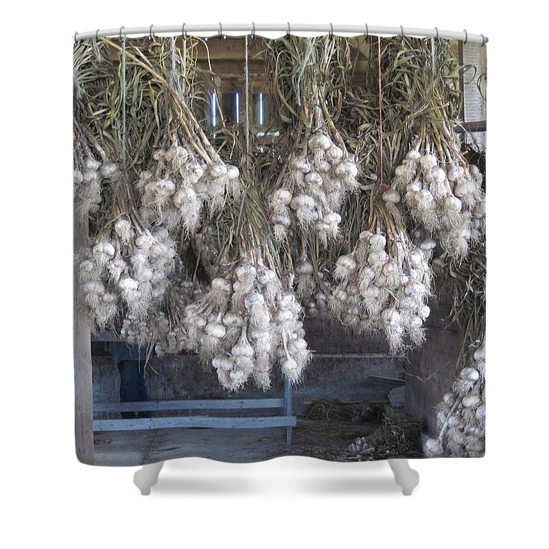 Garlic Shower Curtain featuring the photograph The Garlic Harvest by Megan Walsh