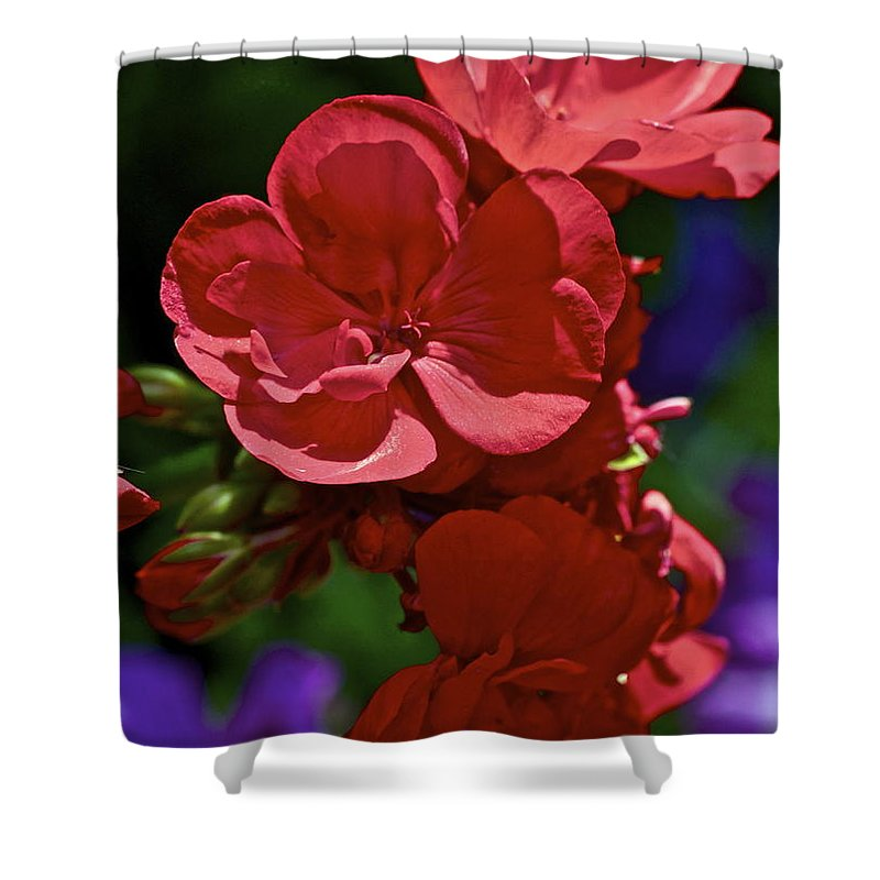 Geranium Shower Curtain featuring the photograph The Geraniums by Gwyn Newcombe