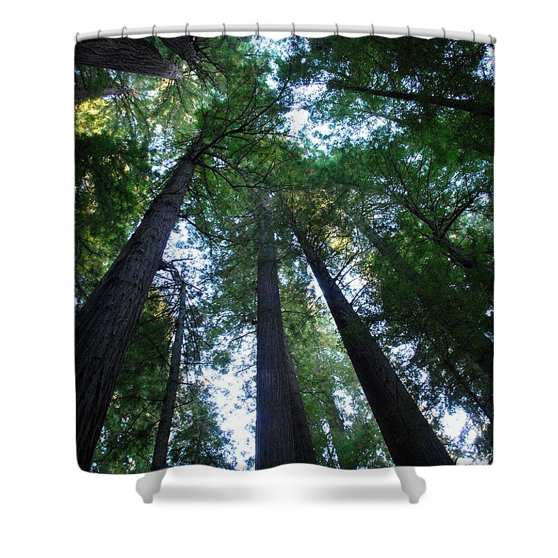 Redwoods Shower Curtain featuring the photograph The Giant Redwoods I by Kathy Sampson