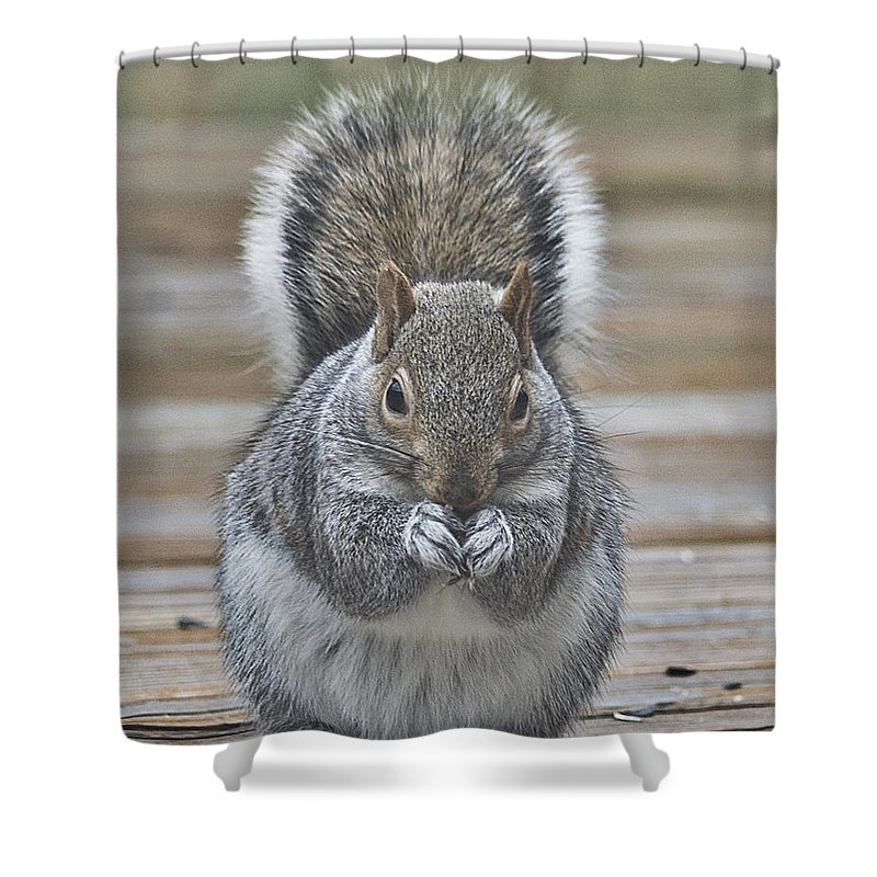 Animals Nature Squirrel Outdoors Shower Curtain featuring the photograph The Gray Squirrel by Diane Hawkins