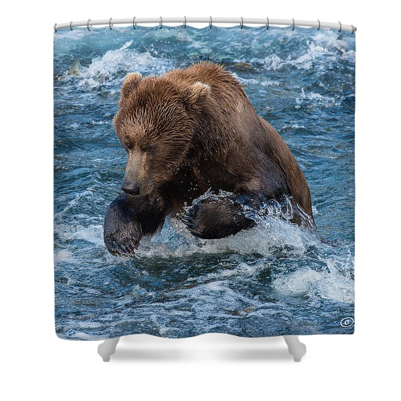 Alaska Shower Curtain featuring the photograph The Grizzly Plunge by Joan Wallner