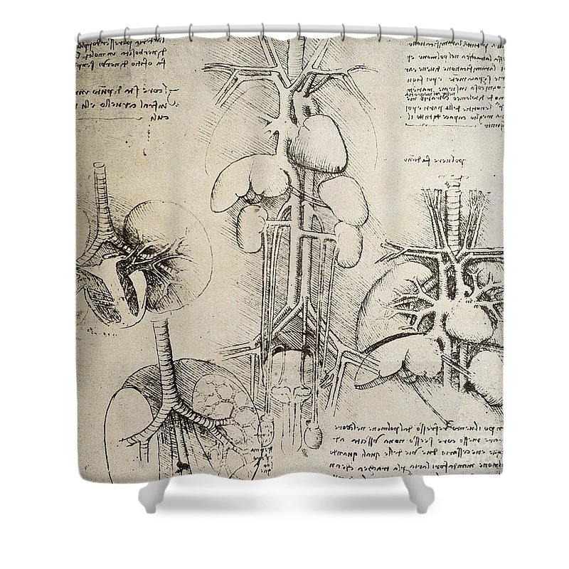 Da Shower Curtain featuring the drawing The Heart And The Circulation by Leonardo Da Vinci