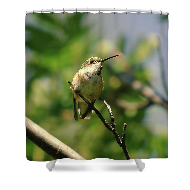 Humming Birds Shower Curtain featuring the photograph The Intimidating Watchman by Jeff Swan