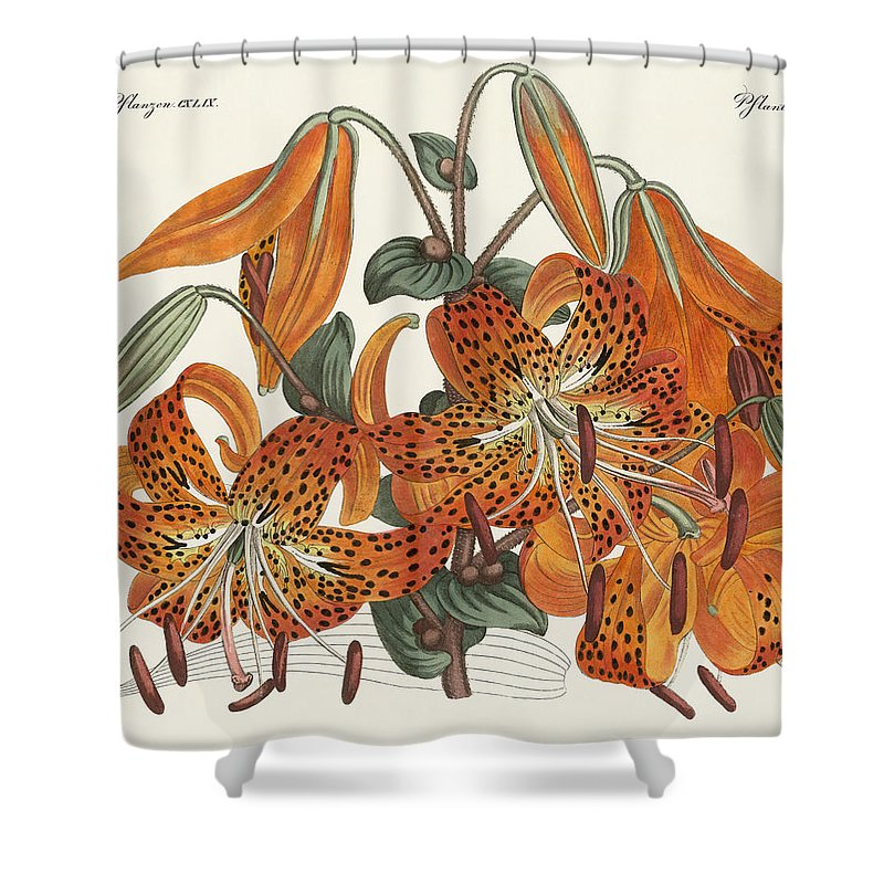 Bertuch Shower Curtain Featuring The Drawing Japanese Tiger Lily By Splendid Art Prints