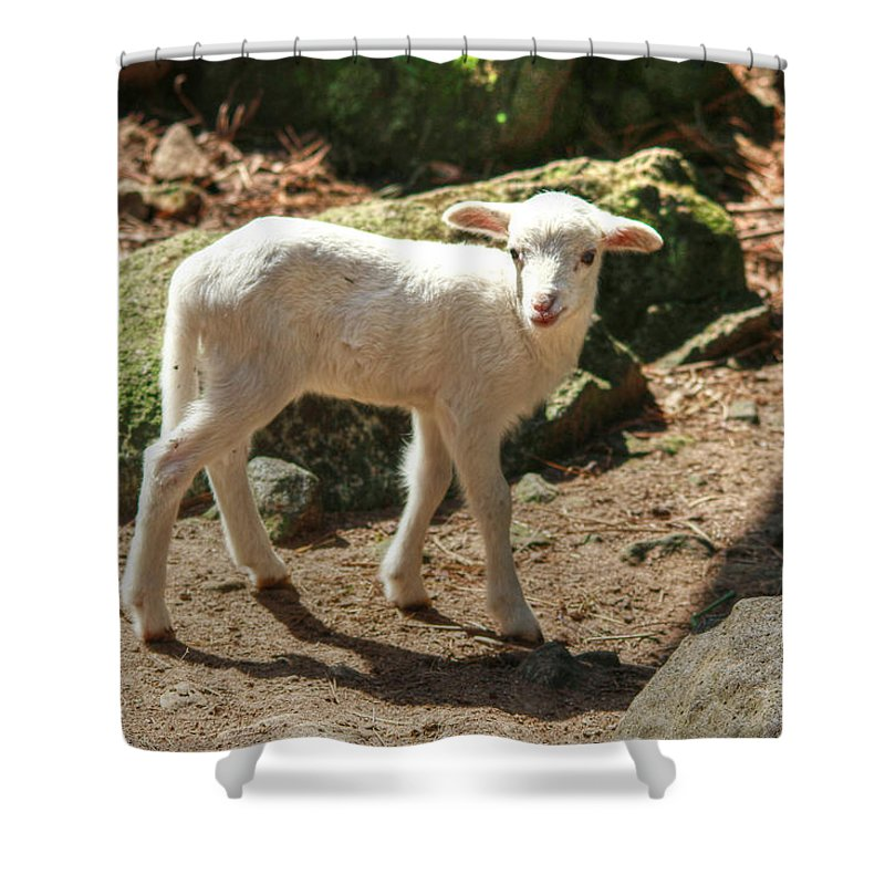 Kid Shower Curtain featuring the photograph The Kid by Eti Reid
