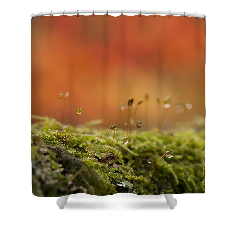 Abstract Shower Curtain featuring the photograph The Miniature World Of Moss by Anne Gilbert