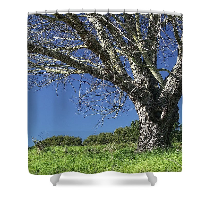 Nature Shower Curtain featuring the photograph The Old Oak Tree by Donna Blackhall