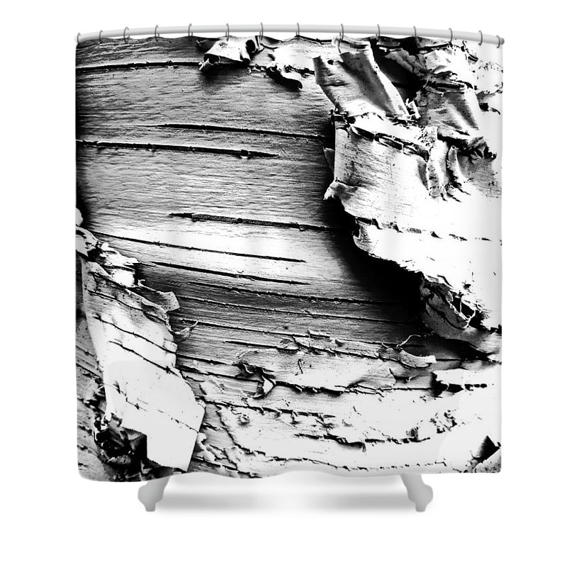 Monochrome Shower Curtain featuring the photograph The Peeling Birch by Steve Taylor
