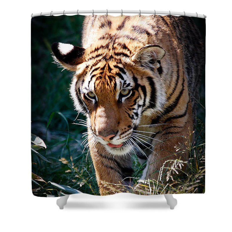 Tiger Shower Curtain featuring the photograph Prowling Tiger by Athena Mckinzie