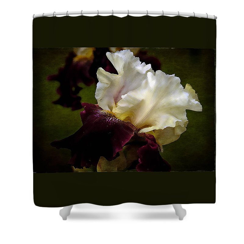 Floral Wall Art Shower Curtain featuring the photograph Purple And White Iris by Thom Zehrfeld