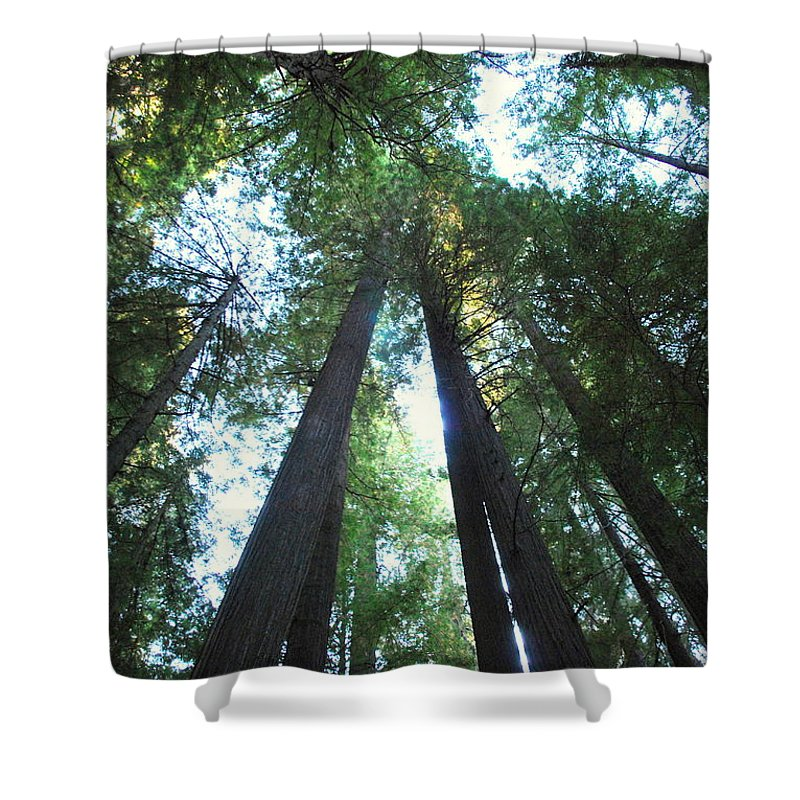Redwoods Shower Curtain featuring the photograph The Redwood Giants by Kathy Sampson