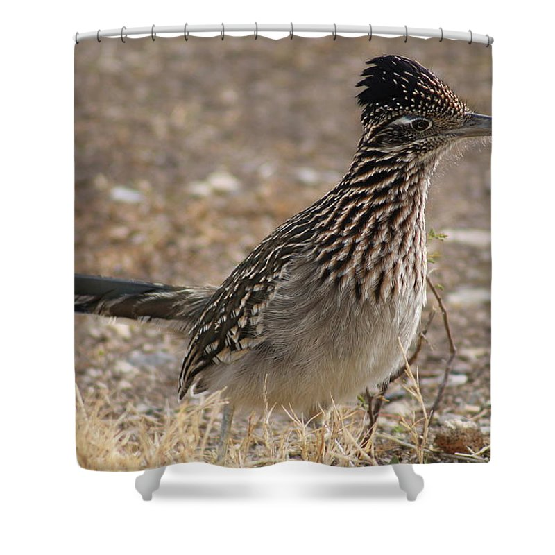 Shower Curtain featuring the photograph The Roadrunner by G Berry