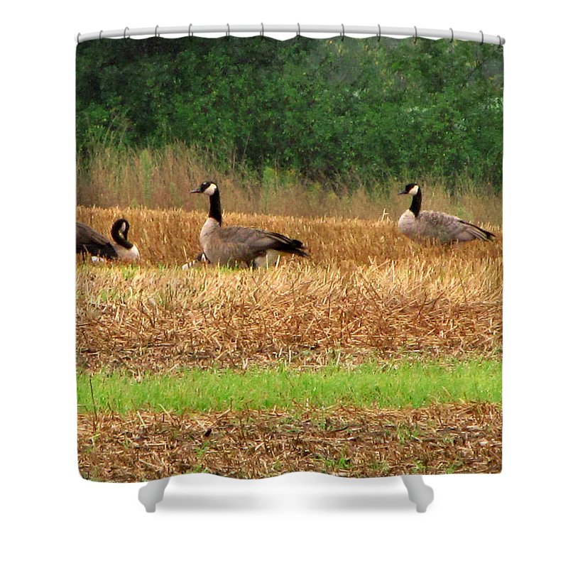 Wildlife Shower Curtain featuring the painting The Search In Life by Robert Nacke