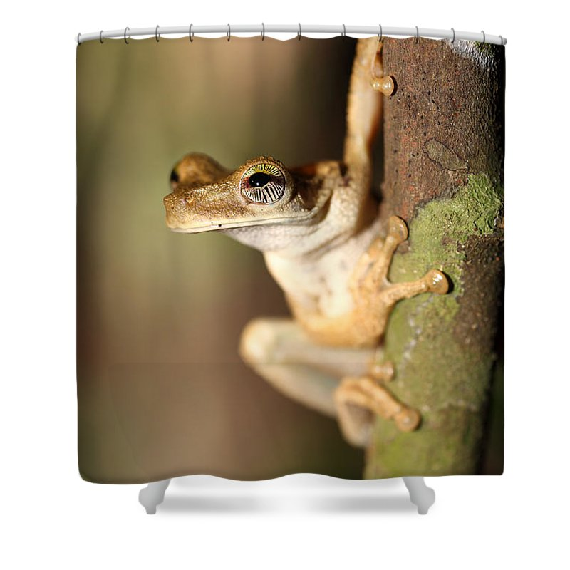 Frog Shower Curtain featuring the photograph The Sentinel by James Brunker