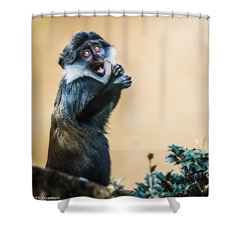 Animals Shower Curtain featuring the photograph The Starving Ape by Stwayne Keubrick