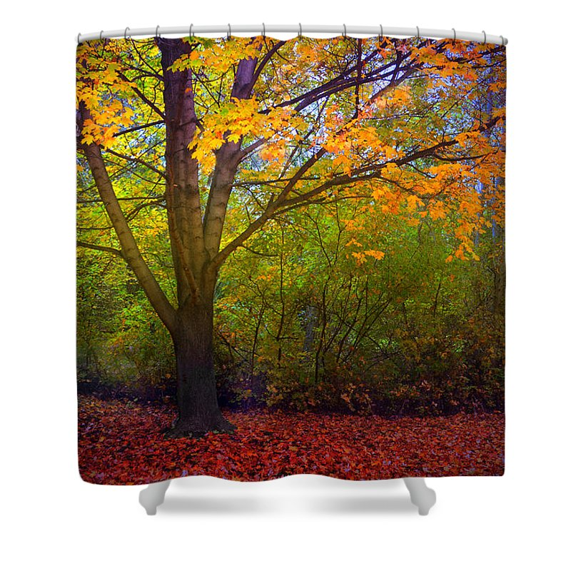 Tree Shower Curtain featuring the photograph The Sunoka Tree by Tara Turner