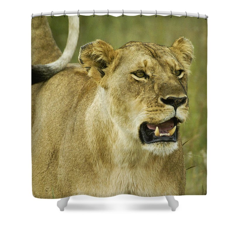 Africa Shower Curtain featuring the photograph The Tail Rules by Michele Burgess
