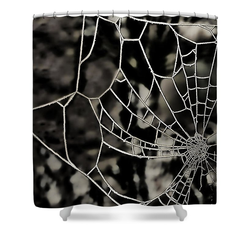 Spider's Web Shower Curtain featuring the photograph The Tangled Web by Sheila Laurens