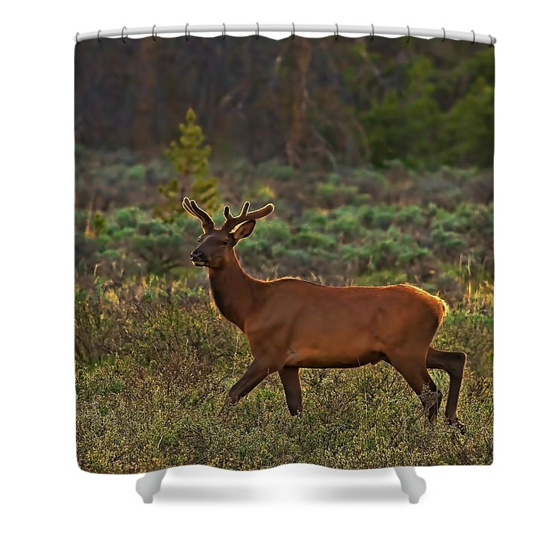 Guard Shower Curtain featuring the photograph The Velveteen Elk by Gary Holmes