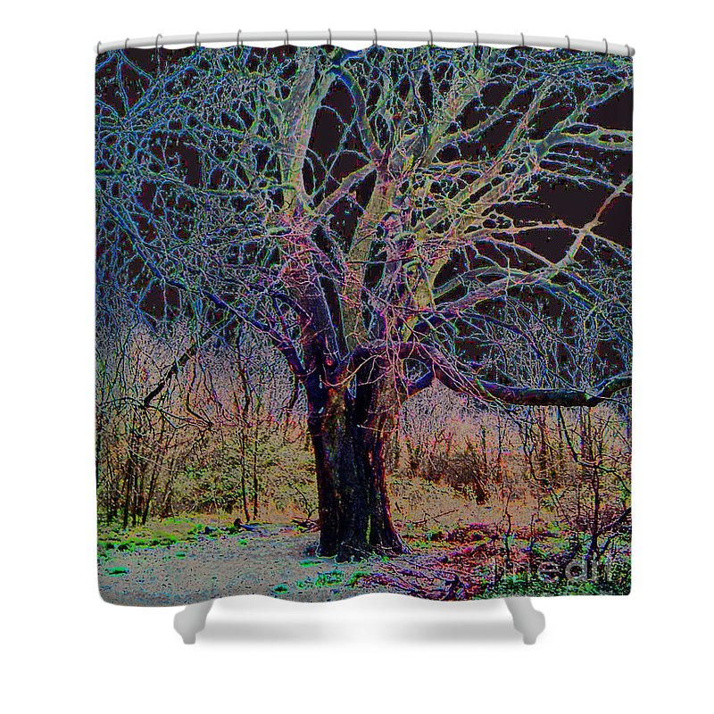 Tree Shower Curtain featuring the photograph 10994 The Widow Tree by Colin Hunt