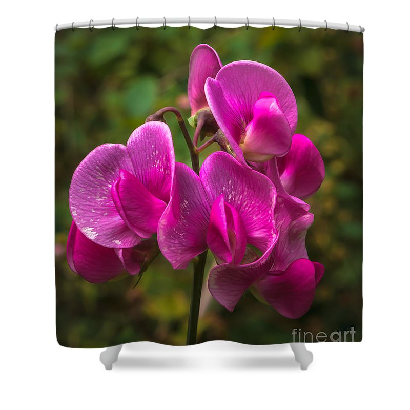 Lathyrus Odoratus Shower Curtain featuring the photograph The Wild One by Robert Bales