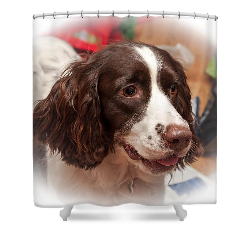 Xmas Shower Curtain featuring the photograph The Wonders Of Christmas by Steve Harrington