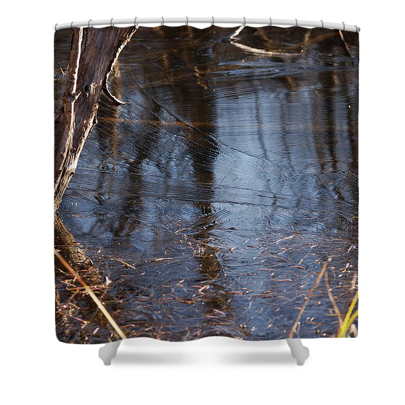 Ice Shower Curtain featuring the photograph Thin Ice Of A New Day by Susan Capuano