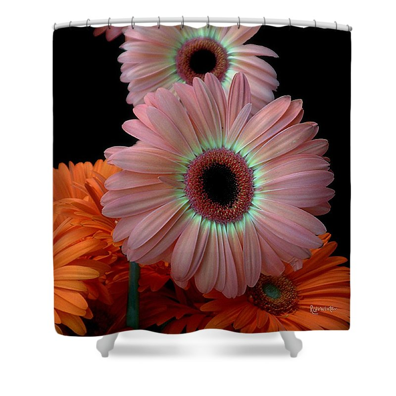 Gerberas Shower Curtain featuring the photograph Third Place by RC DeWinter