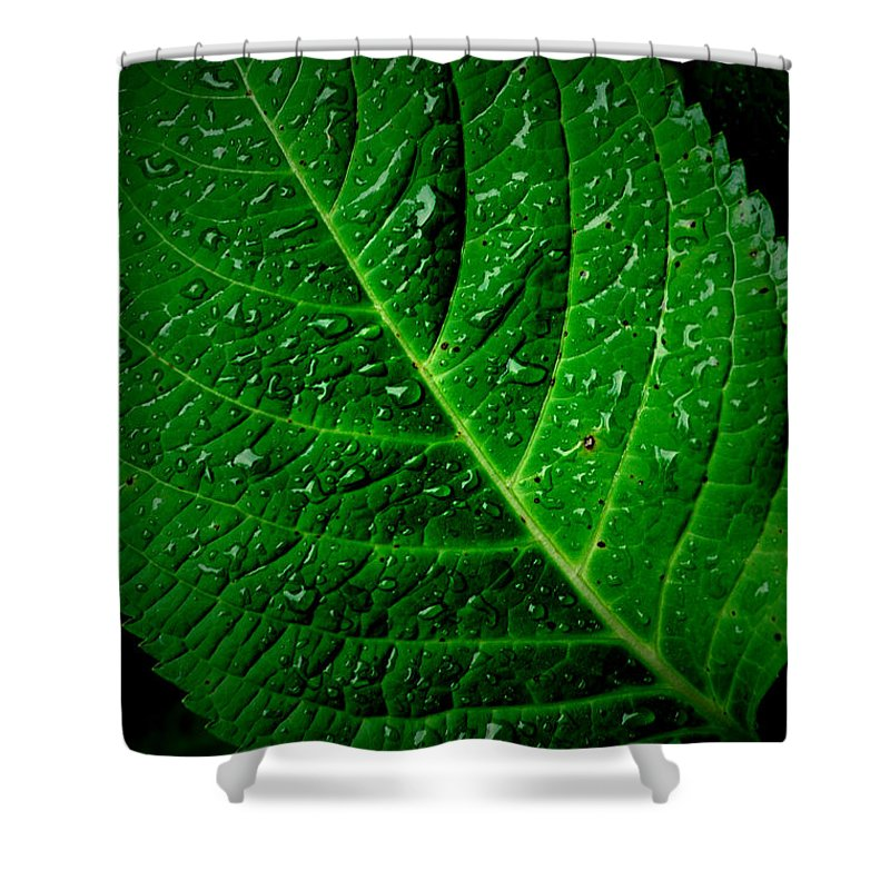Leaf Shower Curtain featuring the photograph Thirsty by David Weeks