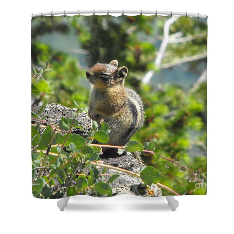 Animals Shower Curtain featuring the photograph This Is The Life by Brandi Maher