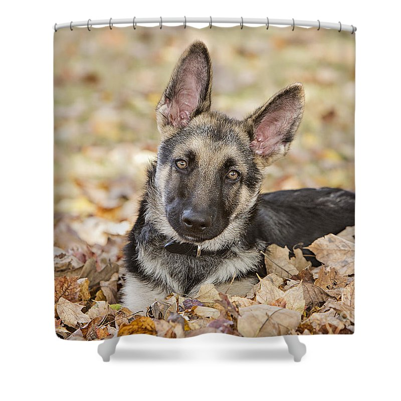 Pet Shower Curtain featuring the photograph Those Ears by Linda D Lester