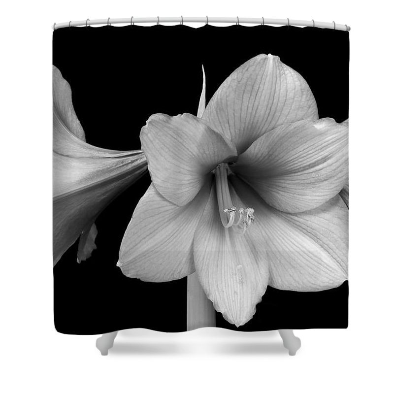 Amaryllis shower curtain featuring the photograph three amaryllis flowers in black and white by james bo