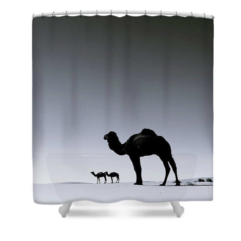 Scenics Shower Curtain featuring the photograph Three Camels In The Sahara Desert by Zodebala