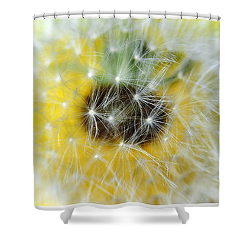 Photography Shower Curtain featuring the photograph Three Dandelions In A Line by Kaye Menner