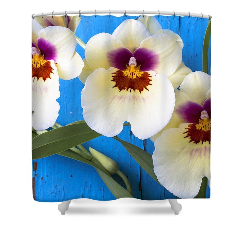 Ow Shower Curtain featuring the photograph Three Exotic Orchids by Garry Gay