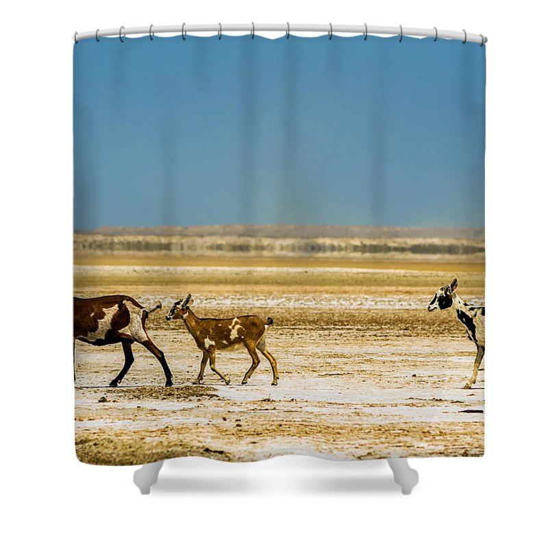 Goat Shower Curtain featuring the photograph Three Goats In A Desert by Jess Kraft