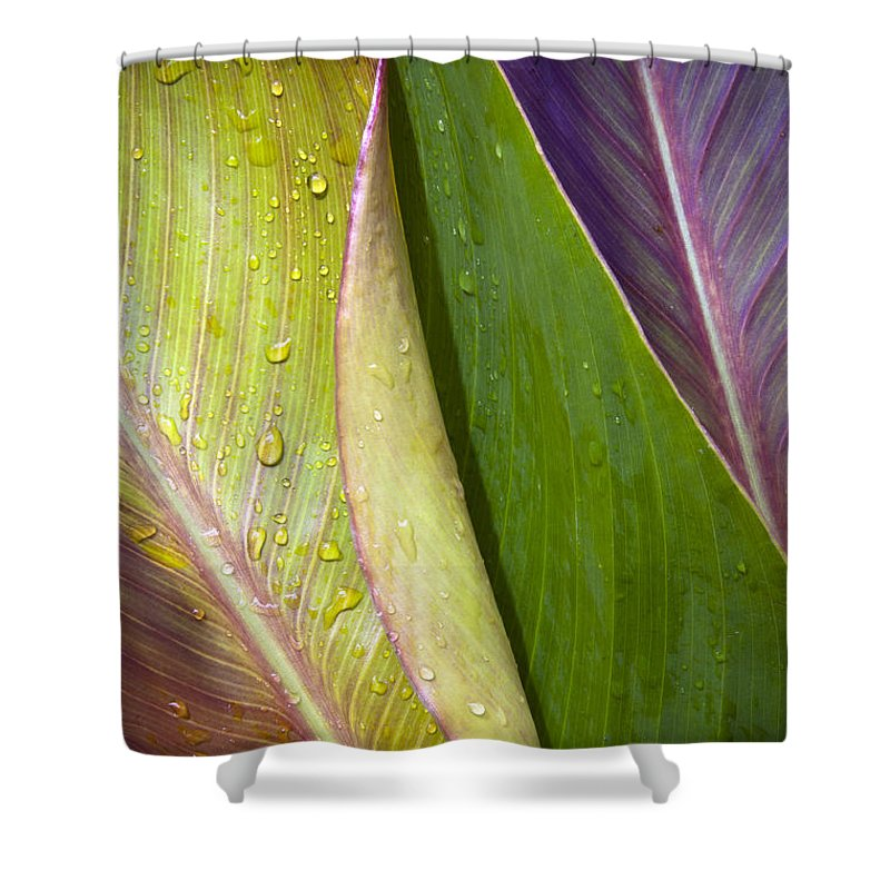 Background Shower Curtain featuring the photograph Three Leaves by Tim Hester