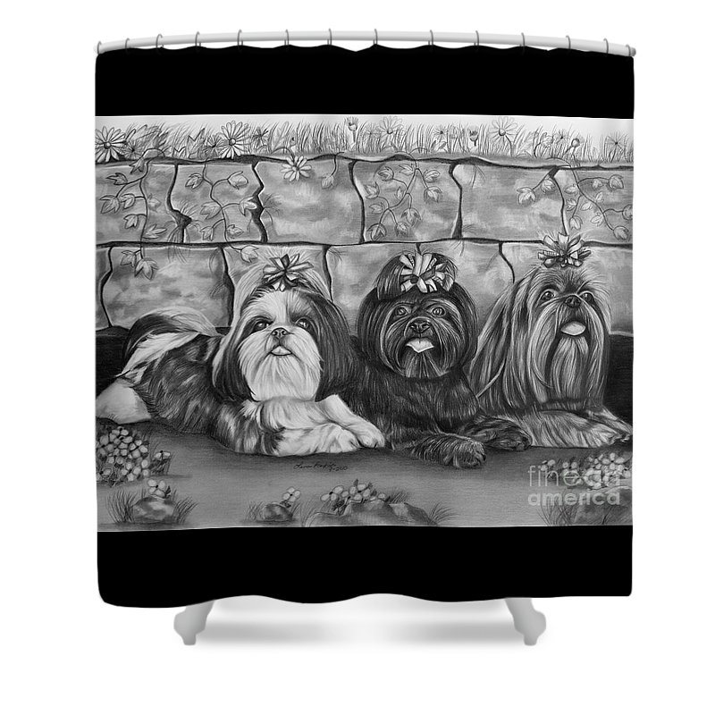 Shih Tzu Shower Curtain featuring the drawing Three Little Shih Tzus by Lena Auxier