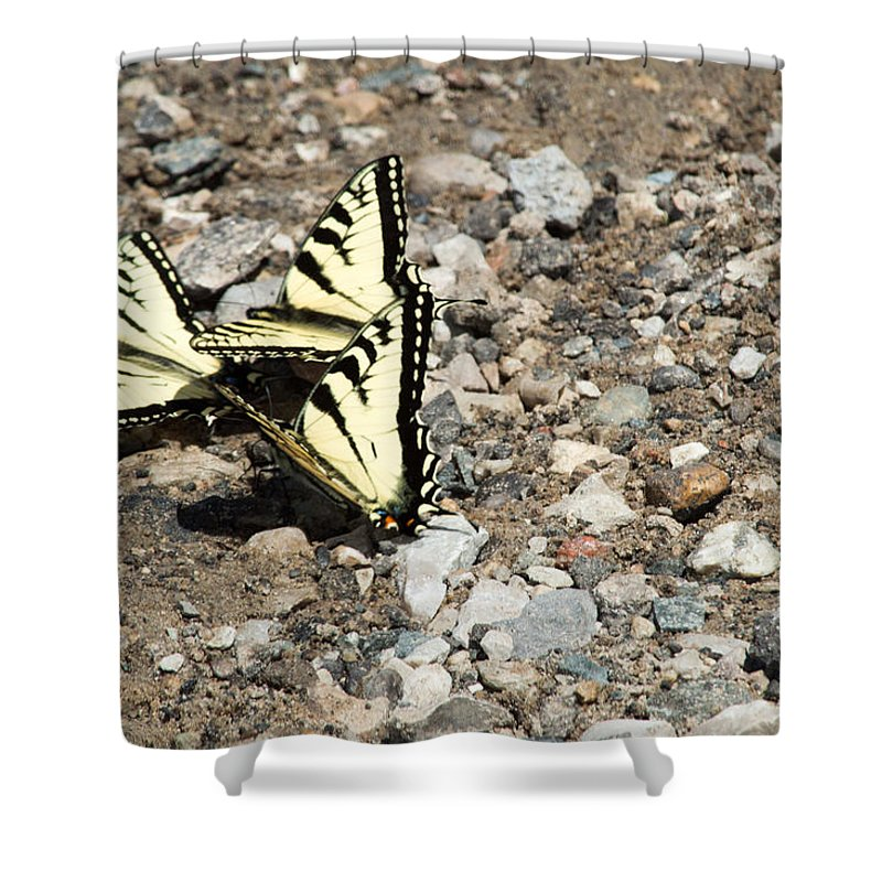 Swallowtail Shower Curtain featuring the photograph Three Of A Kind by Linda Kerkau