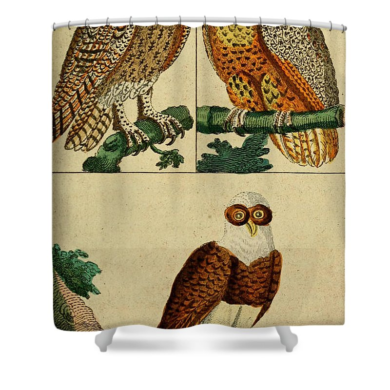 Audubon Shower Curtain featuring the painting Three Owls by Philip Ralley
