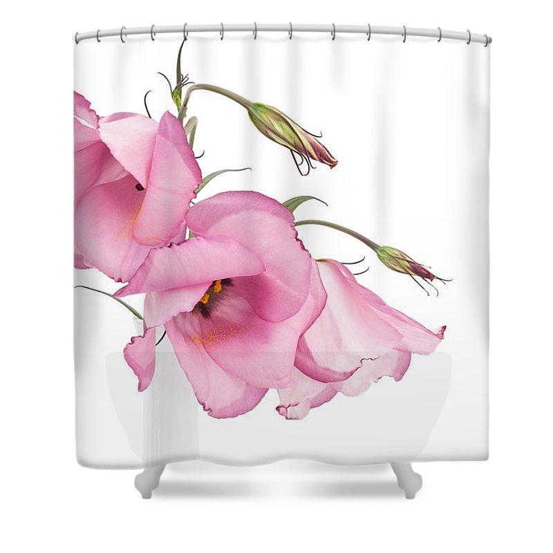 Lisianthus Shower Curtain featuring the photograph Three Pink Lisianthus Flowers by Ann Garrett