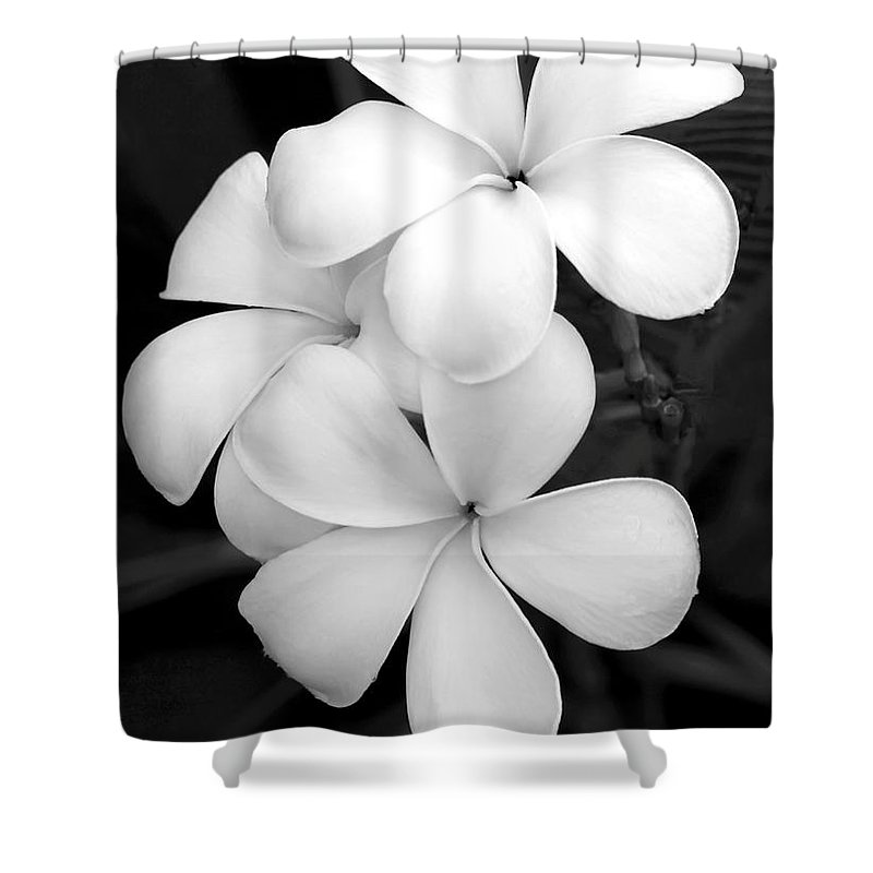 Macro Shower Curtain featuring the photograph Three Plumeria Flowers In Black And White by Sabrina L Ryan