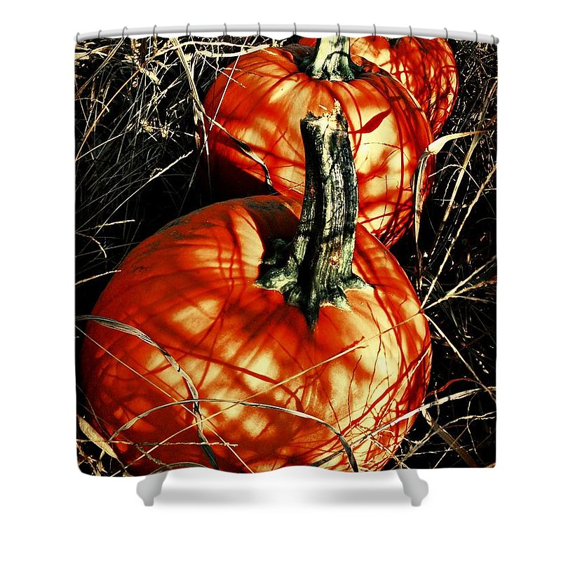 Halloween Shower Curtain featuring the photograph Three Pumpkins by Chris Berry
