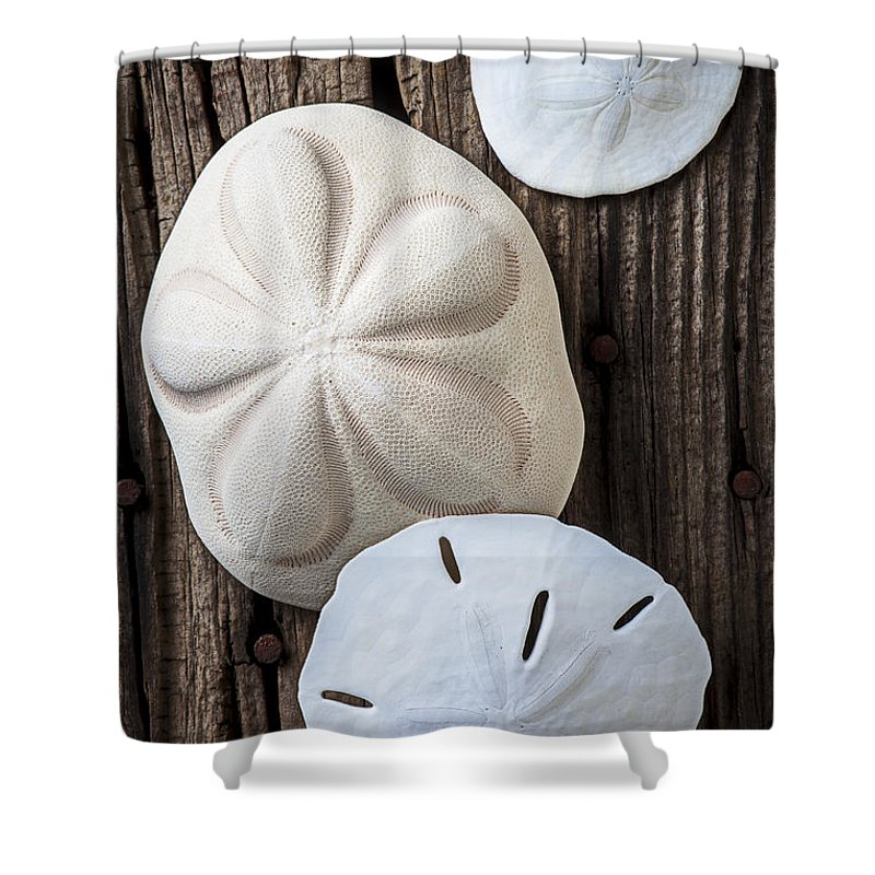 Sand Dollars Shower Curtain Featuring The Photograph Three Types Of Sand  Dollars By Garry Gay