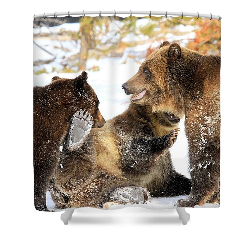 Grizzly Bear Shower Curtain featuring the photograph Three's A Crowd by Adam Jewell