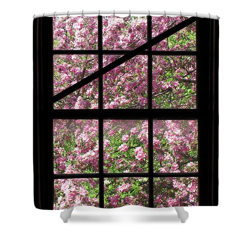 Window Pane Shower Curtains