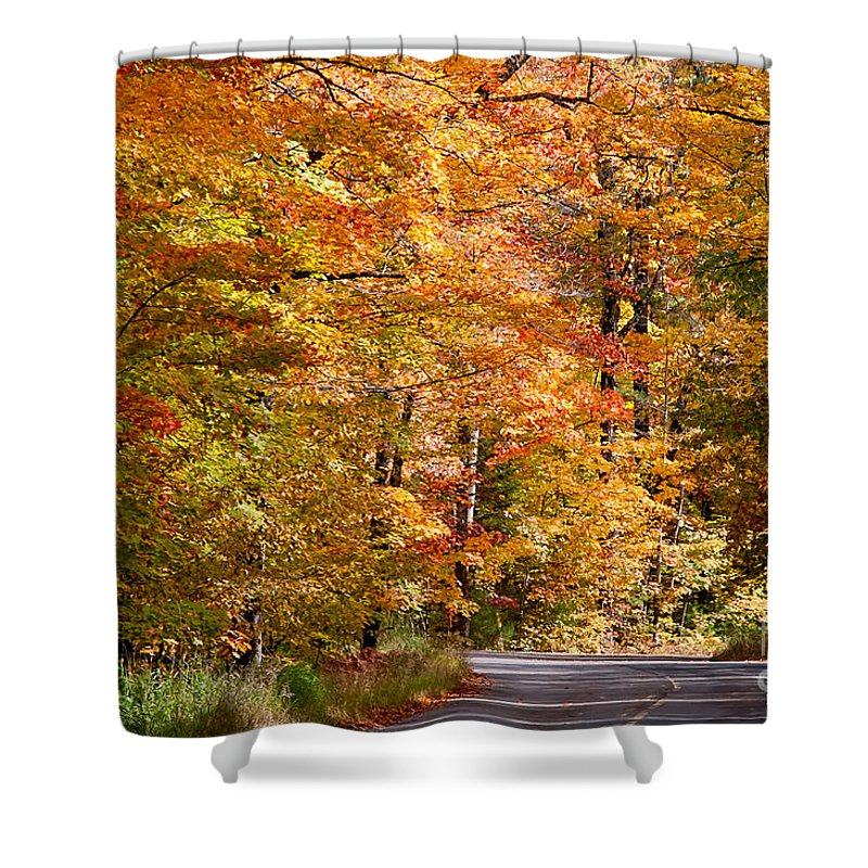 David Perry Lawrence Shower Curtain featuring the photograph Through The Woods By D. Perry Lawrence by David Perry Lawrence