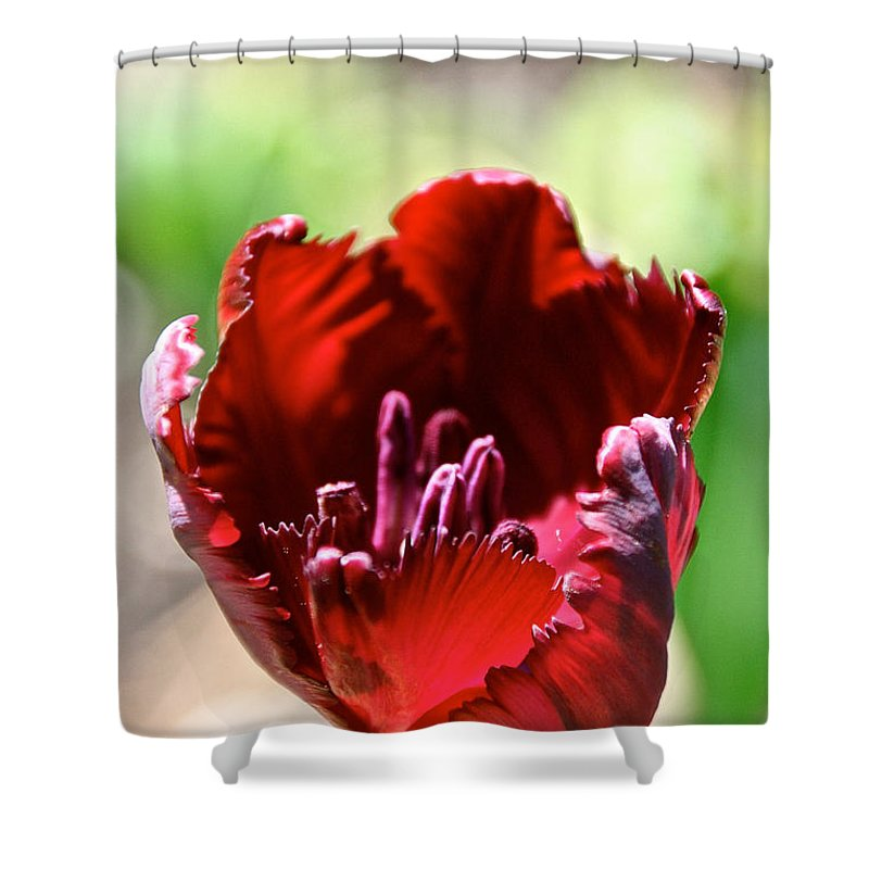 Flower Shower Curtain featuring the photograph Thursday's Favorite by Susan Herber