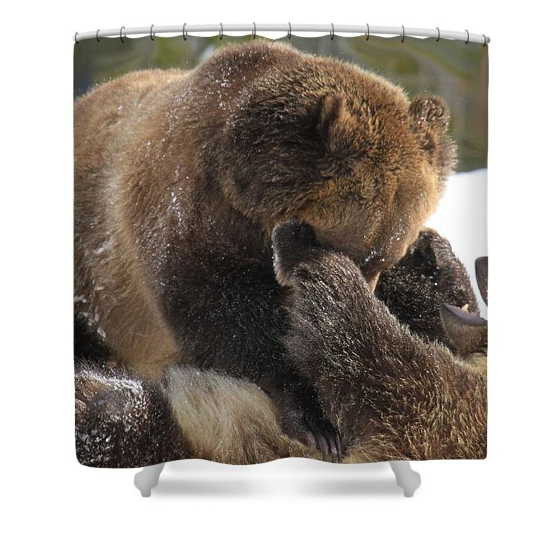 Grizzly Bear Shower Curtain featuring the photograph Ticklish by Adam Jewell